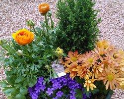 Côté Fleurs Création - MABLY - Les coupes de plantes