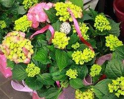 Côté Fleurs Création - MABLY - Les Plantes Fleuries de coté fleurs création