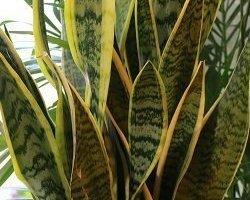 Côté Fleurs Création - MABLY - Les plantes vertes de coté fleurs création